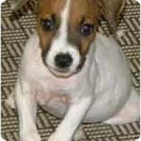 Adopt A Pet :: Timber - Kingwood, TX