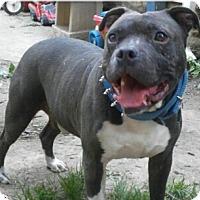 Adopt A Pet :: Jojo - Dayton, OH
