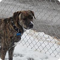 Adopt A Pet :: Hope - Cedar Rapids, IA