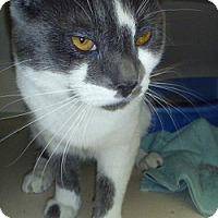 Adopt A Pet :: Teddy - Hamburg, NY