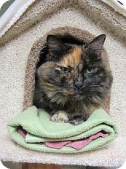 Calico Cat for adoption in Quilcene, Washington - Catrina