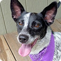 Adopt A Pet :: Mamie - Baton Rouge, LA