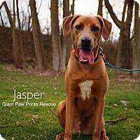 Adopt A Pet :: Jasper - Valparaiso, IN