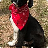 Adopt A Pet :: Oreo - Mooresville, NC