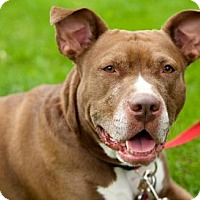 Adopt A Pet :: Minnie - Round Lake Beach, IL