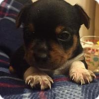 Adopt A Pet :: Kravitz - Houston, TX