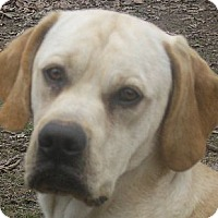 Adopt A Pet :: Will - Jacksonville, FL