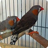 Adopt A Pet :: Kerry - Lenexa, KS