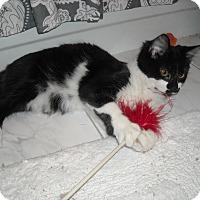 Adopt A Pet :: Duke- Lover Boy! - Arlington, VA