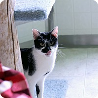 Adopt A Pet :: Liliette - Chicago, IL