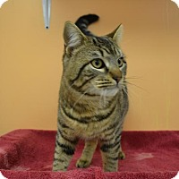Adopt A Pet :: Macho - East Smithfield, PA