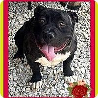 Adopt A Pet :: Petunia - Rancho Cucamonga, CA