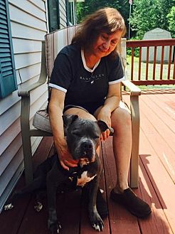 American Staffordshire Terrier Mix Dog for adoption in Whitestone, New York - Maggie (ACC)