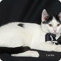 Adopt A Pet :: Carlos - Kerrville, TX