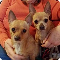 Adopt A Pet :: Bonnie and Clyde - Lawrenceville, GA