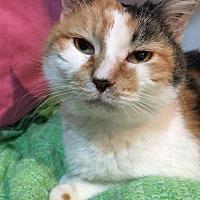 Adopt A Pet :: SUNSHINE 2 - Flint HIll, VA