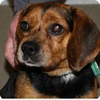 Adopt A Pet :: Howdy - Avon, NY
