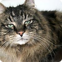 Adopt A Pet :: Oliver - Republic, WA