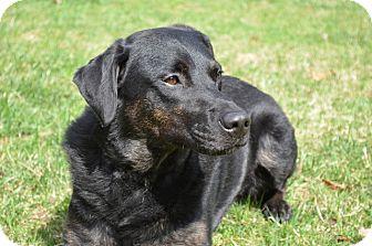 Australian Shepherd Mix Dog for adoption in Frederick, Maryland - Cabela