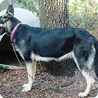 Adopt A Pet :: Freia - Riverview, FL