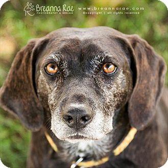 Labrador Retriever Mix Dog for adoption in Sheboygan, Wisconsin - Marge