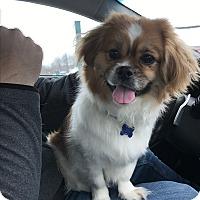 Adopt A Pet :: Chunk - Middlebury, CT