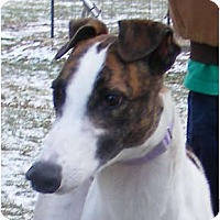 Adopt A Pet :: Charlie - Fremont, OH