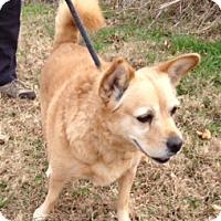 Adopt A Pet :: LEXIE/part of bonded pair - Bedminster, NJ