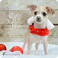 Adopt A Pet :: CARMEL CHEI - Higley, AZ