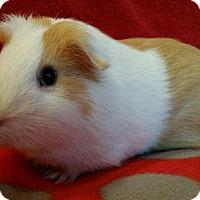 Adopt A Pet :: Gordon - Steger, IL