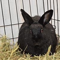 Adopt A Pet :: Eva - Erie, PA