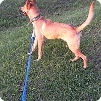 Adopt A Pet :: Dani (fostered in Louisiana) - Cranston, RI
