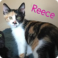 Adopt A Pet :: Reece - Land O Lakes, FL