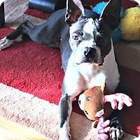 Adopt A Pet :: Pickles-Adoption Pending - Greensboro, NC