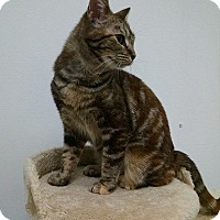 Adopt A Pet :: Paprika - South Bend, IN