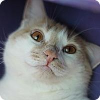 Adopt A Pet :: Ernie - El Cajon, CA