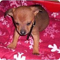 Adopt A Pet :: Jack & Jill - Pembroke Pines, FL