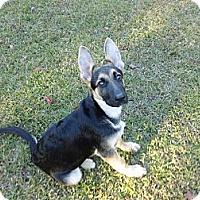 Adopt A Pet :: Titan - Green Cove Springs, FL