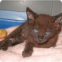 Adopt A Pet :: Monito - Shelton, WA