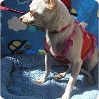 Adopt A Pet :: Gracie - Pembroke Pines, FL