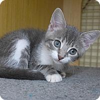 Adopt A Pet :: Mae - Lighthouse Point, FL