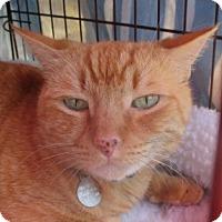 Adopt A Pet :: MAKUA - Los Angeles, CA
