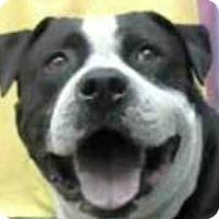 Adopt A Pet :: Bruce - Alta Loma, CA