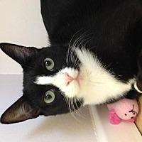 Adopt A Pet :: Miss Ellie - Los Angeles, CA