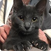 Adopt A Pet :: Valentine - Covington, KY