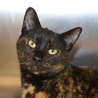 Adopt A Pet :: Kamilah - Mt. Airy, NC