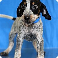 Adopt A Pet :: Harris - Waldorf, MD