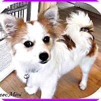 Adopt A Pet :: Mimi - Seattle, WA