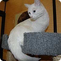Adopt A Pet :: Cassey - Whittier, CA