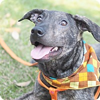 Adopt A Pet :: Sean - San Mateo, CA